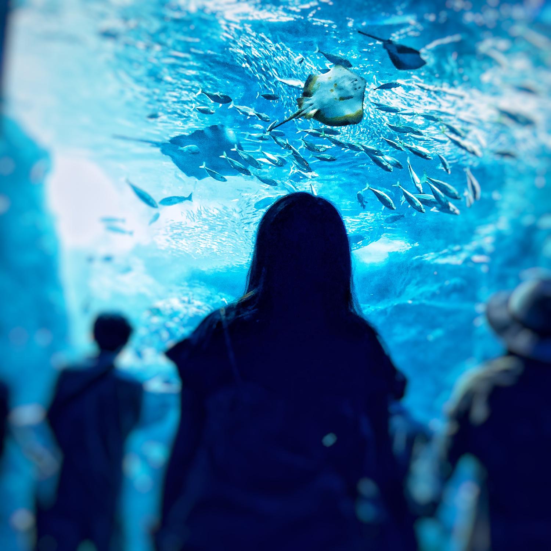 付き合う前は水族館メインの半日デート