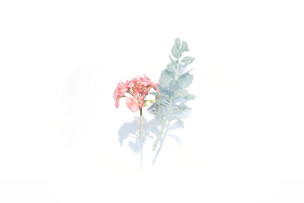 ハピネスフラワーの香り「おやゆび姫」