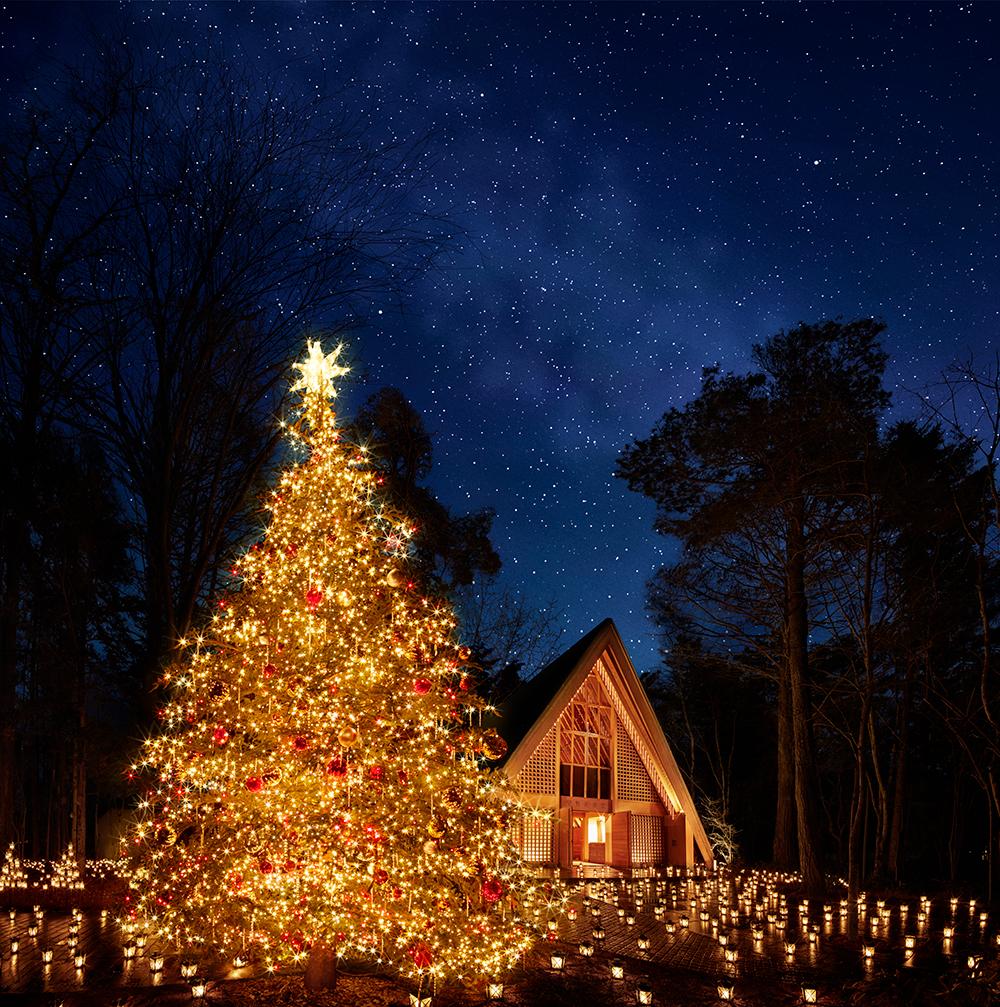 「星降る森のクリスマス」で幻想的な空間に