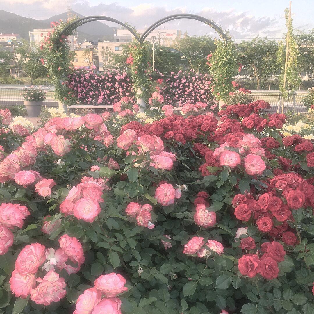 |お花選びにおすすめ