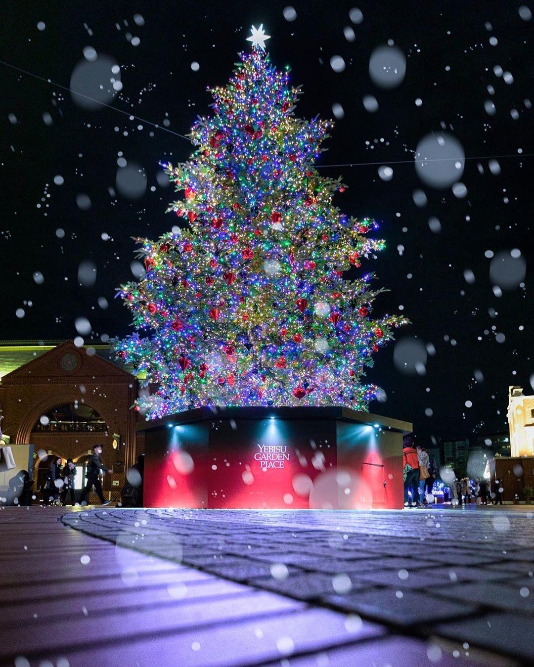 今年のクリスマスは恵比寿に行こうよ