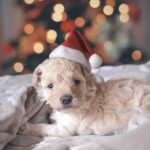 今年は家でゆっくりしたいあなたへ:おひとりクリスマスを楽しめるホリデー映画6選