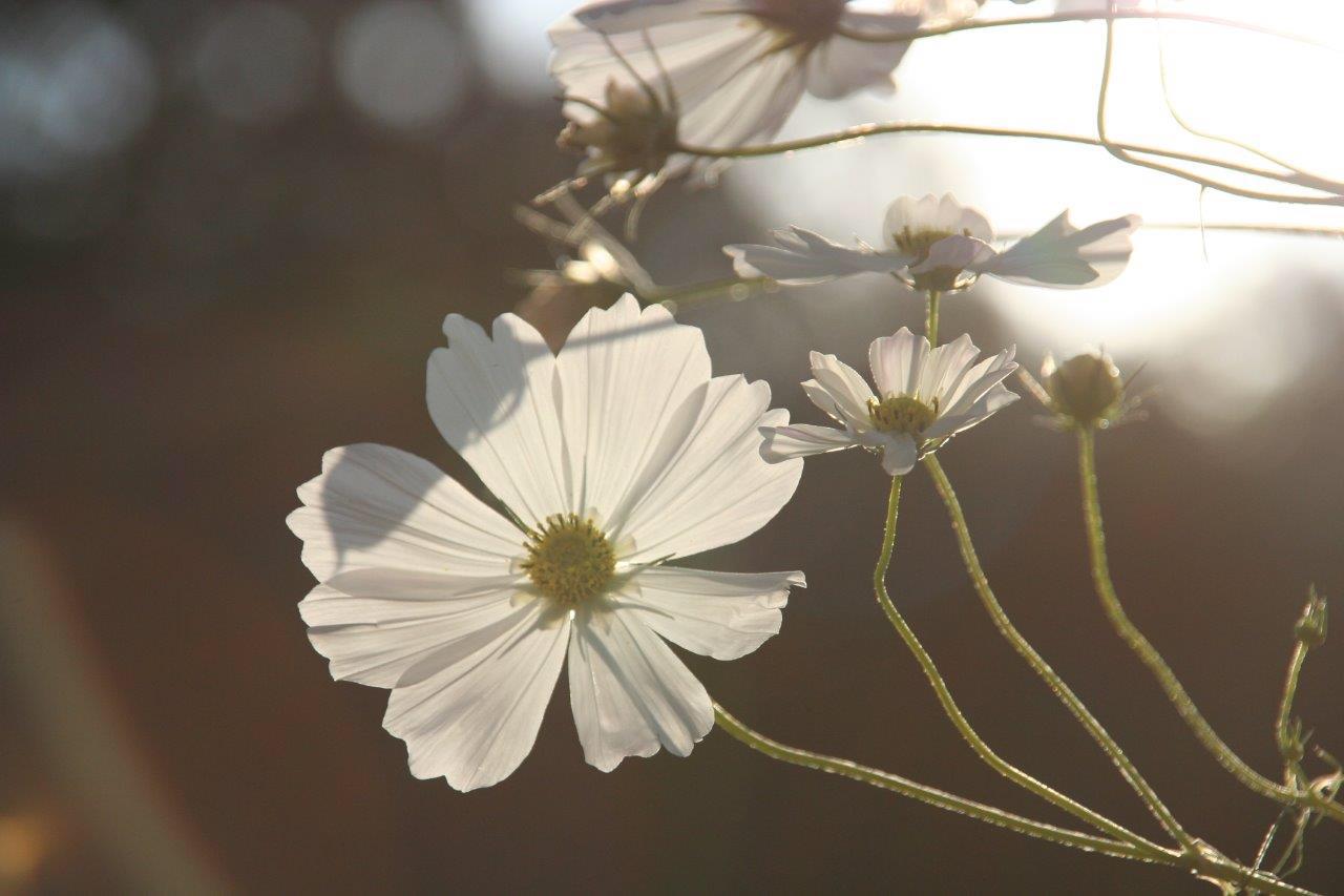 寒い季節は白がお似合いで
