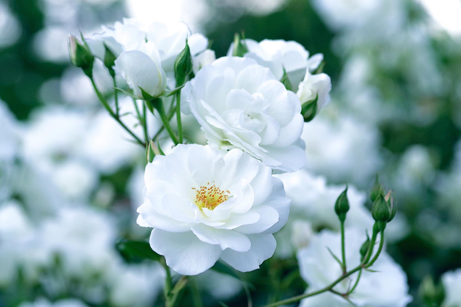 季節の移り変わりを感じられる白