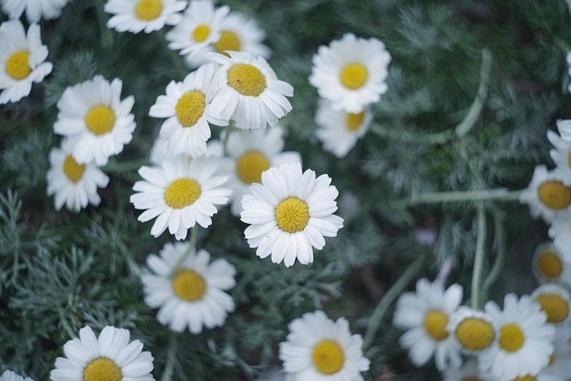 花言葉は「冬の足音」