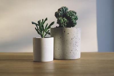 ■育てられる植物の種類