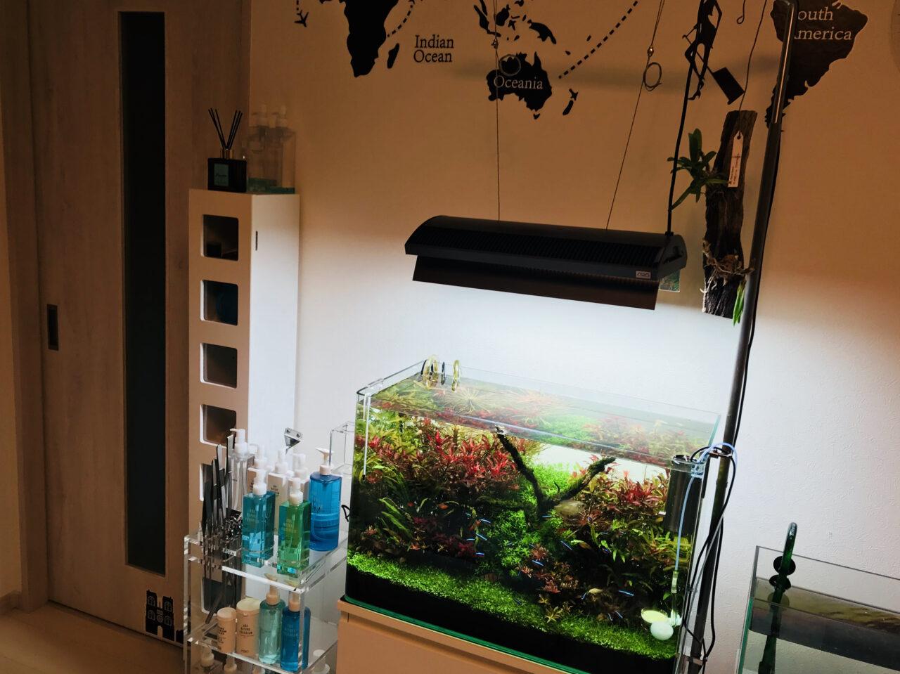 おうちでアクアリウム。水のなかで植物を育てる、オシャレな水上栽培の始め方