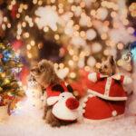 聖なる夜は家で過ごしたいあなたへ。相手別、クリスマスに観たい映画12選
