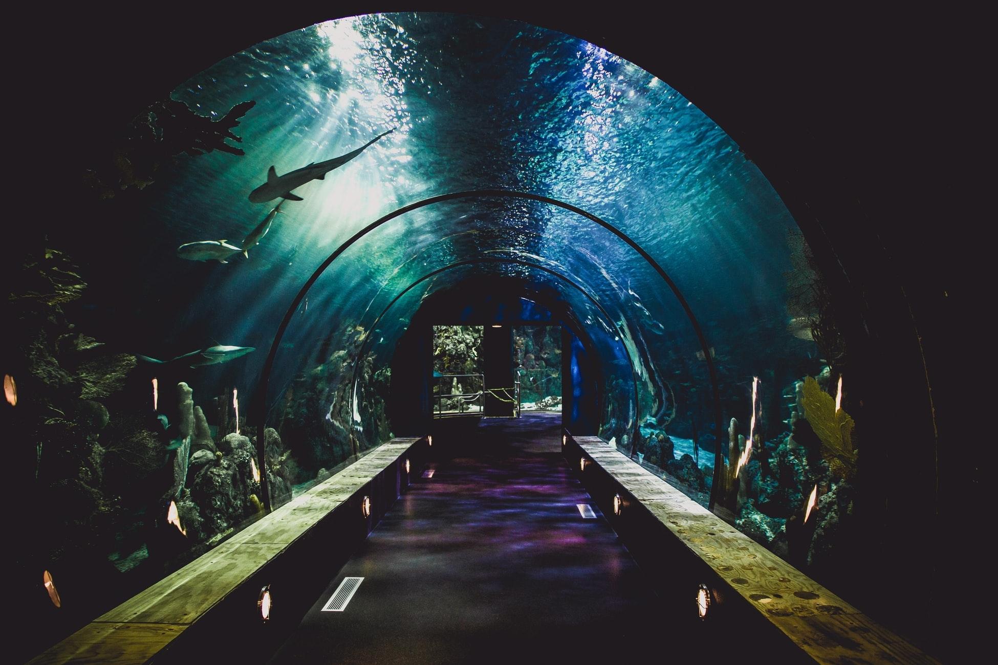 3. 天気を気にせずゆったりできる「水族館」
