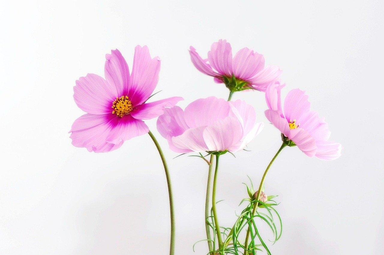 季節の花ちゃんと言えますか?
