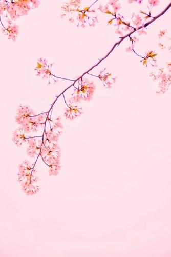 春の色をイニスフリーで体感して♡