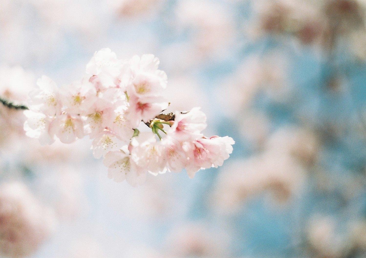 あっという間に、3度目の春