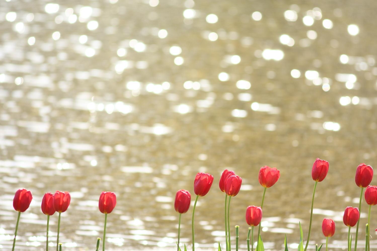 綺麗な花々に癒やされて