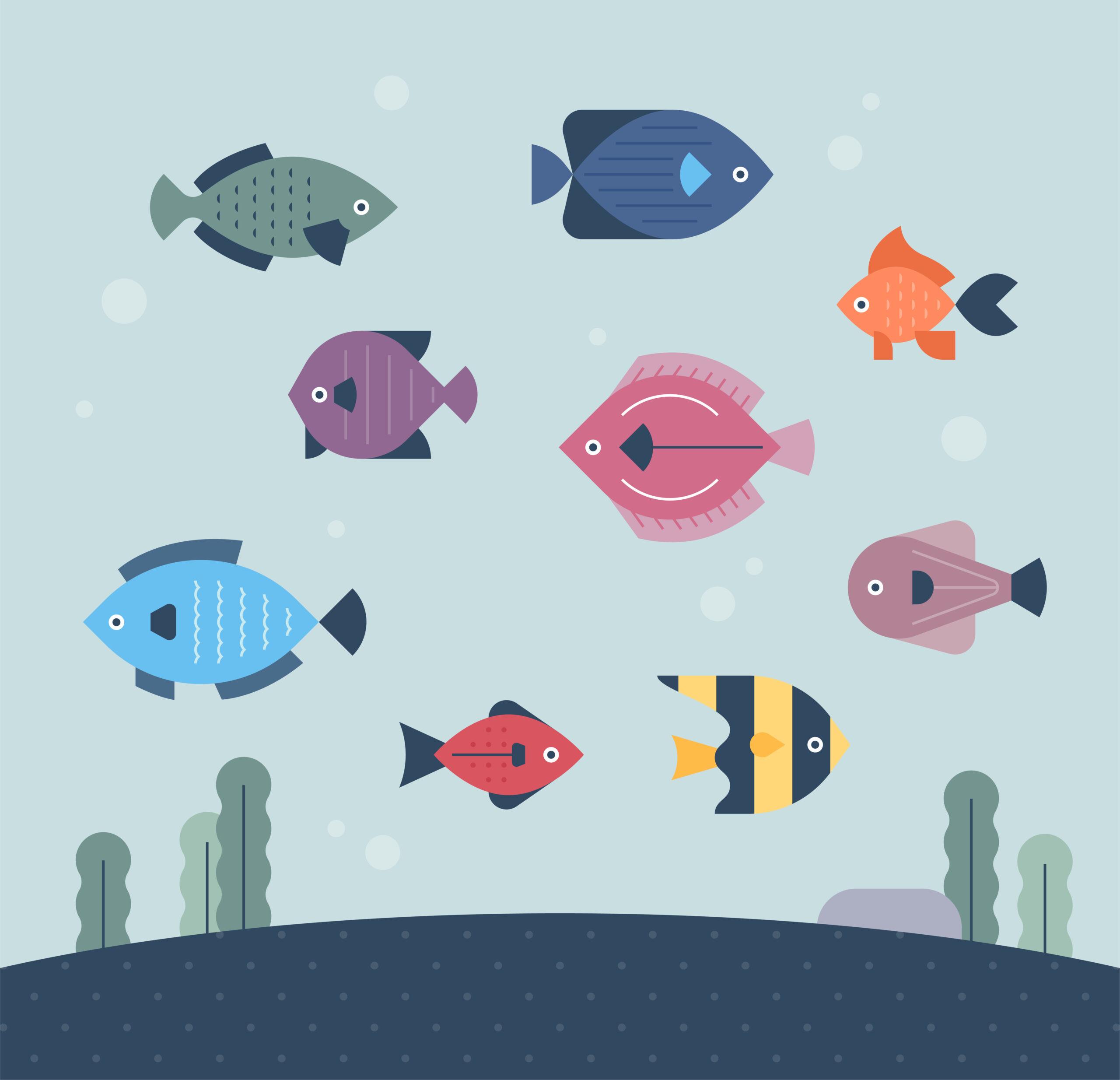 魚の数え方は?