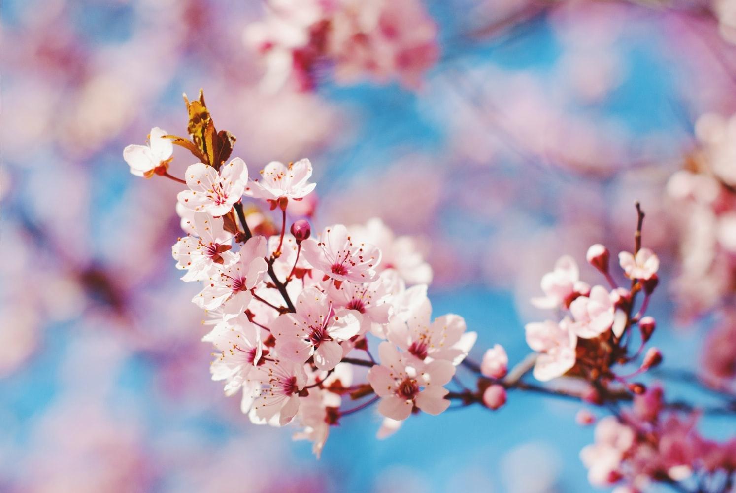春って気持ちがワクワクする