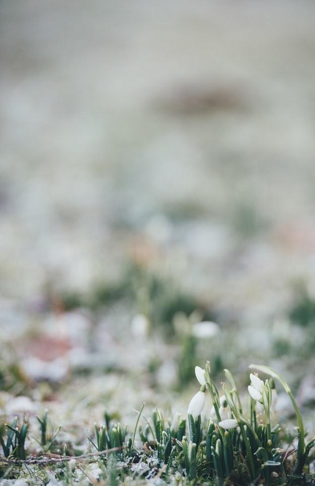 カラーチェンジで春気分を先取り