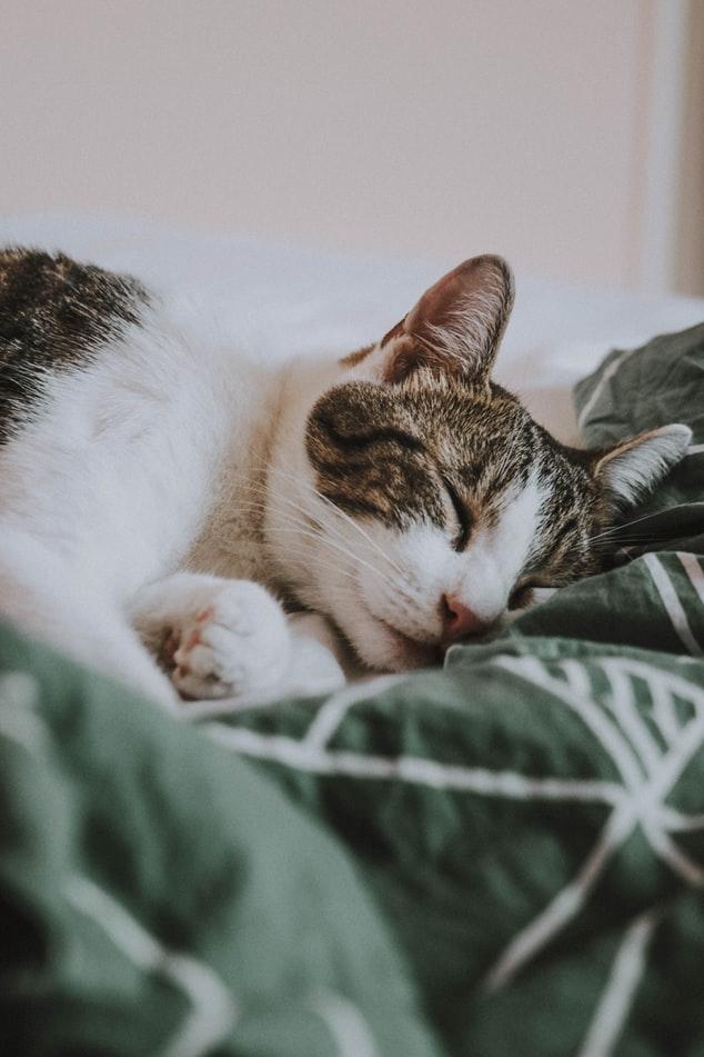 ▶睡眠を大切にする