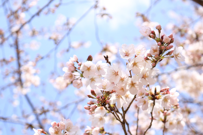 春の気分を高めてくれる香りです