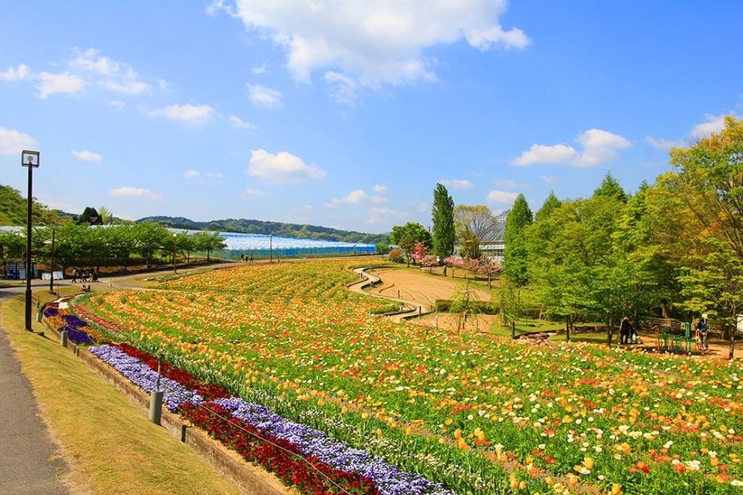 大阪*富田林市農業公園*