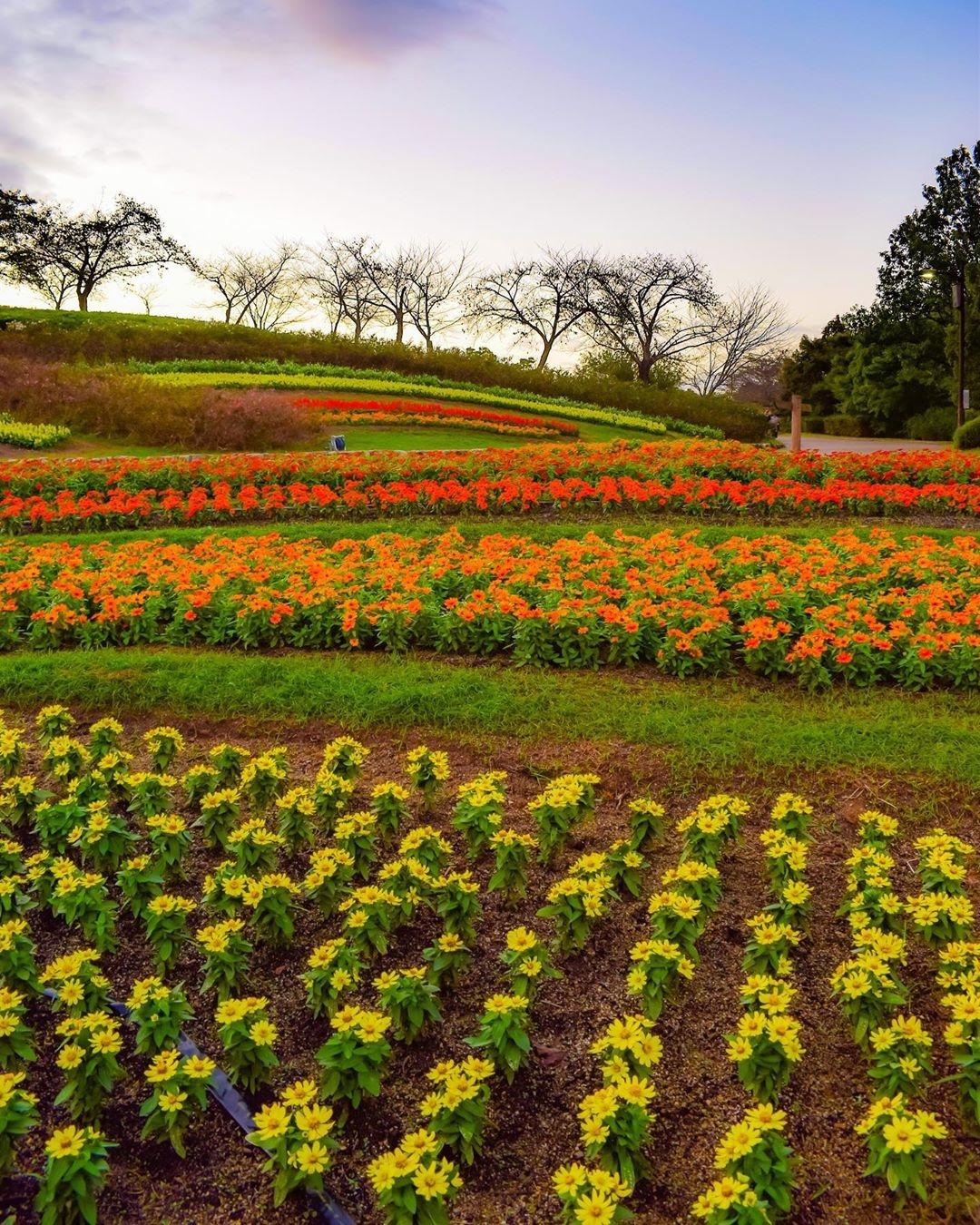 奈良*馬見丘陵公園*