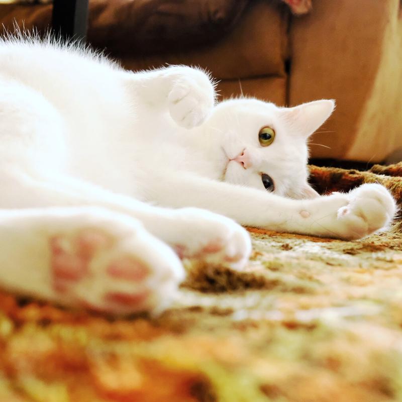 猫の愛情表現…?