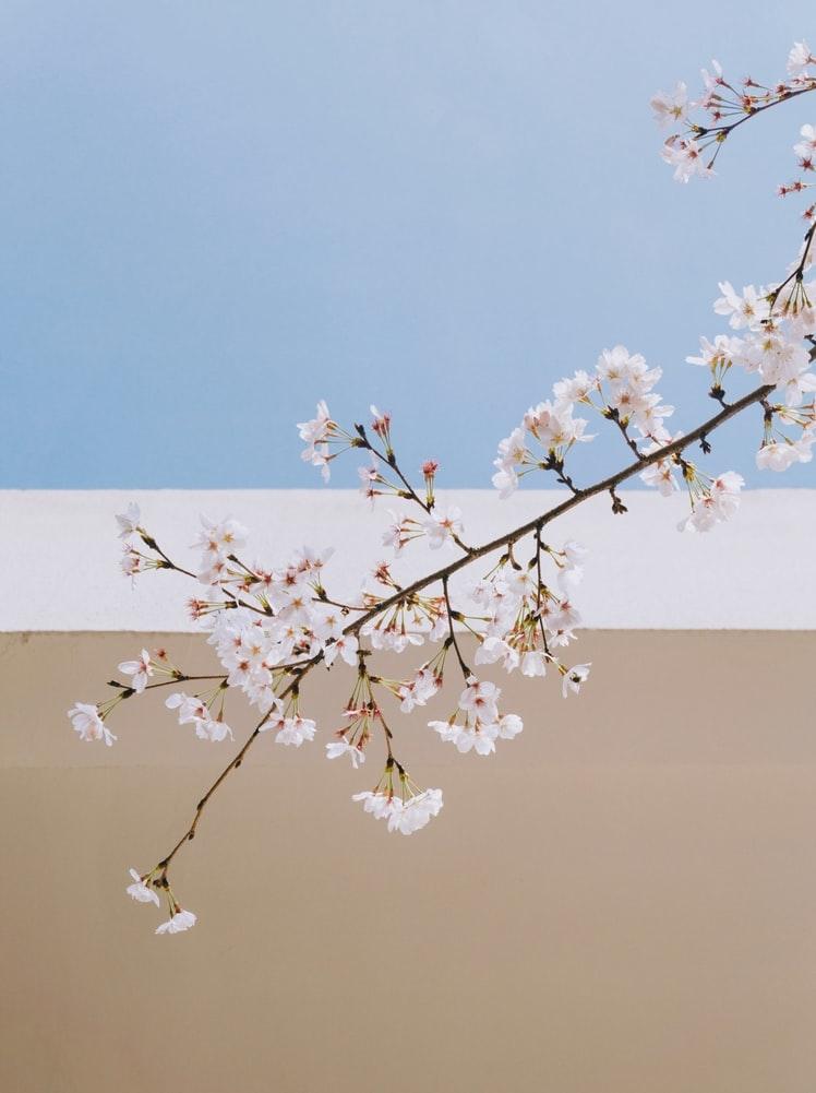 春、心機一転したい季節