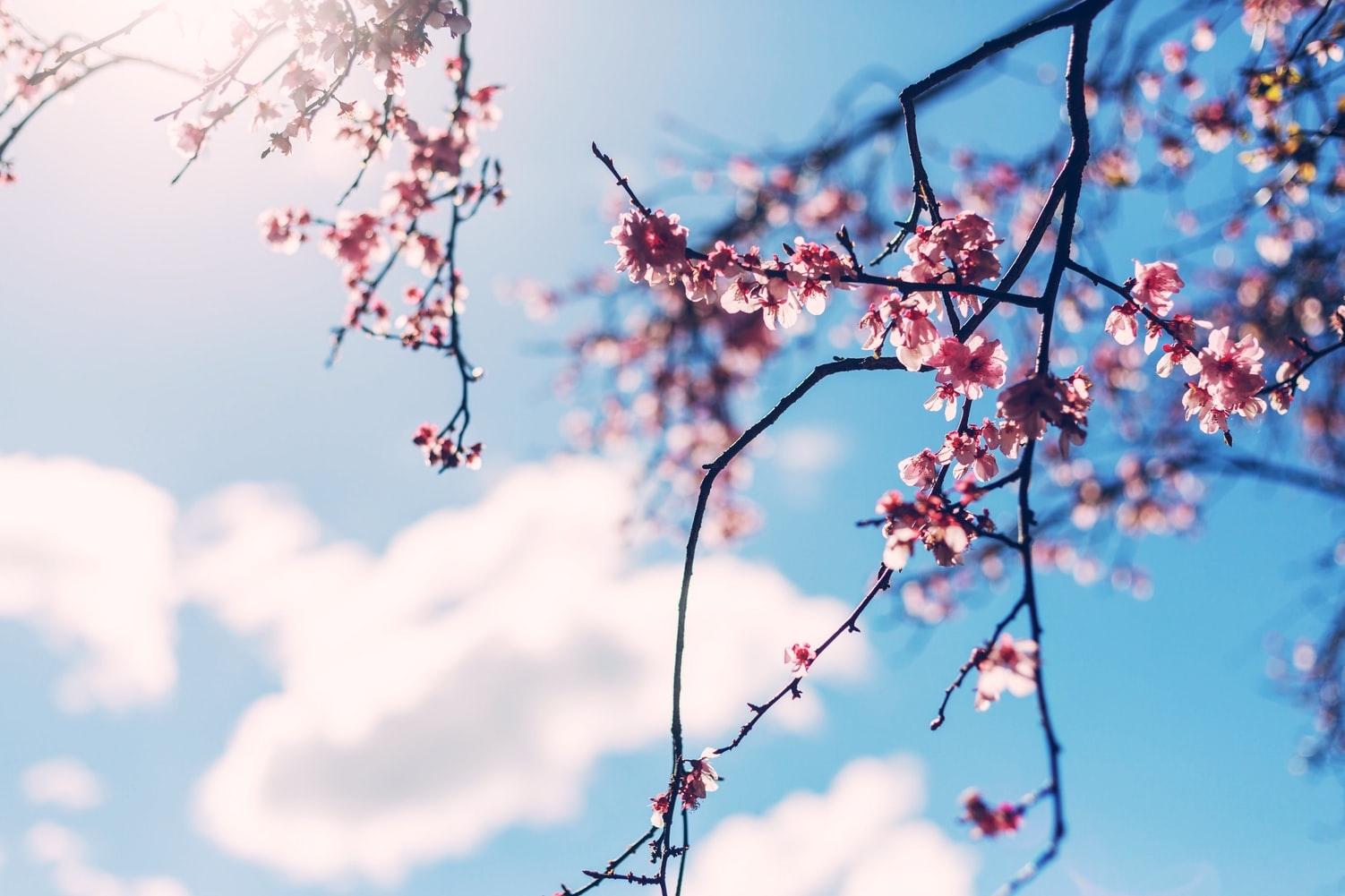 春の暖かさに気分は上がりまくり