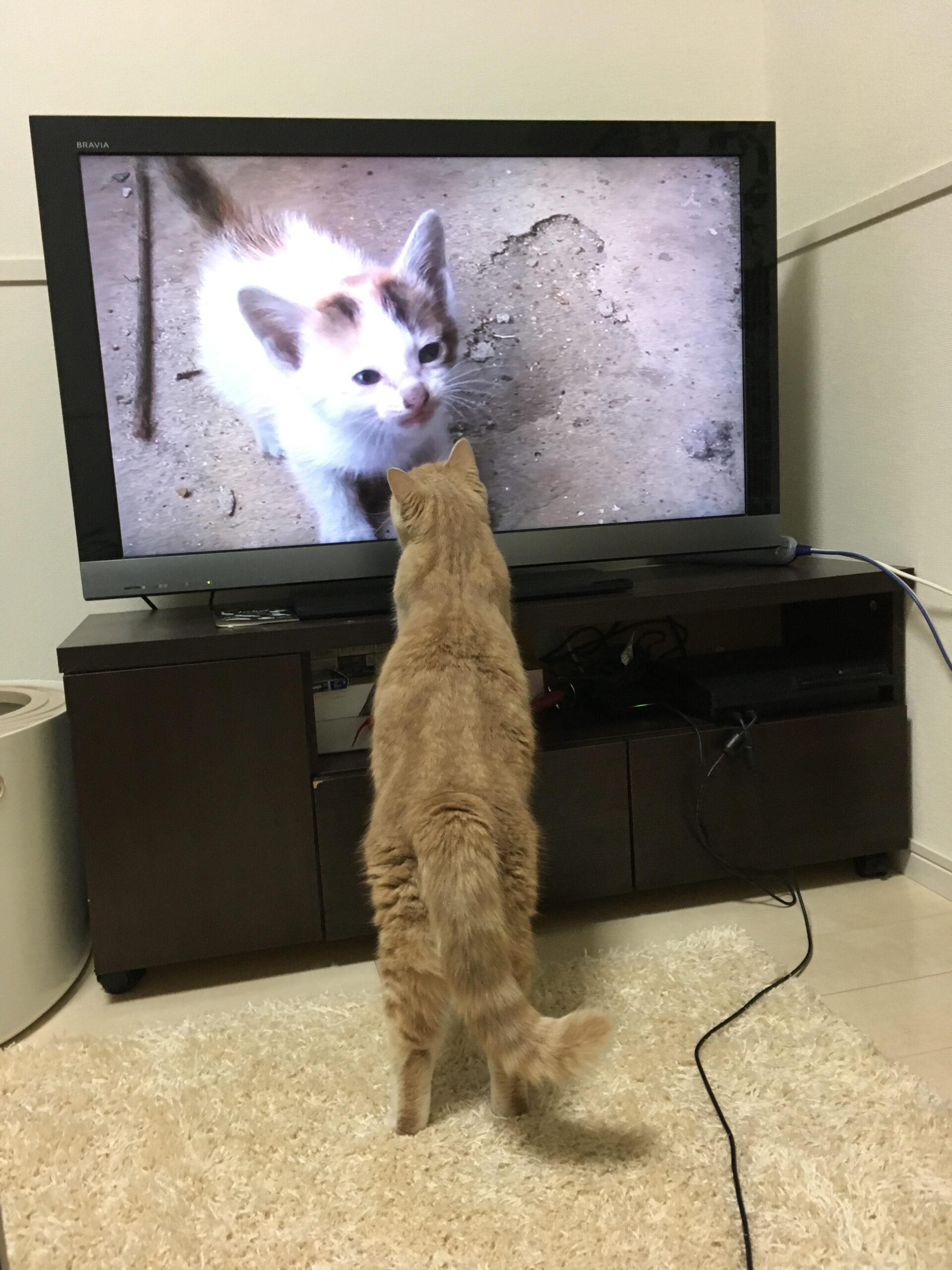 ▶好きなテレビを見てみる