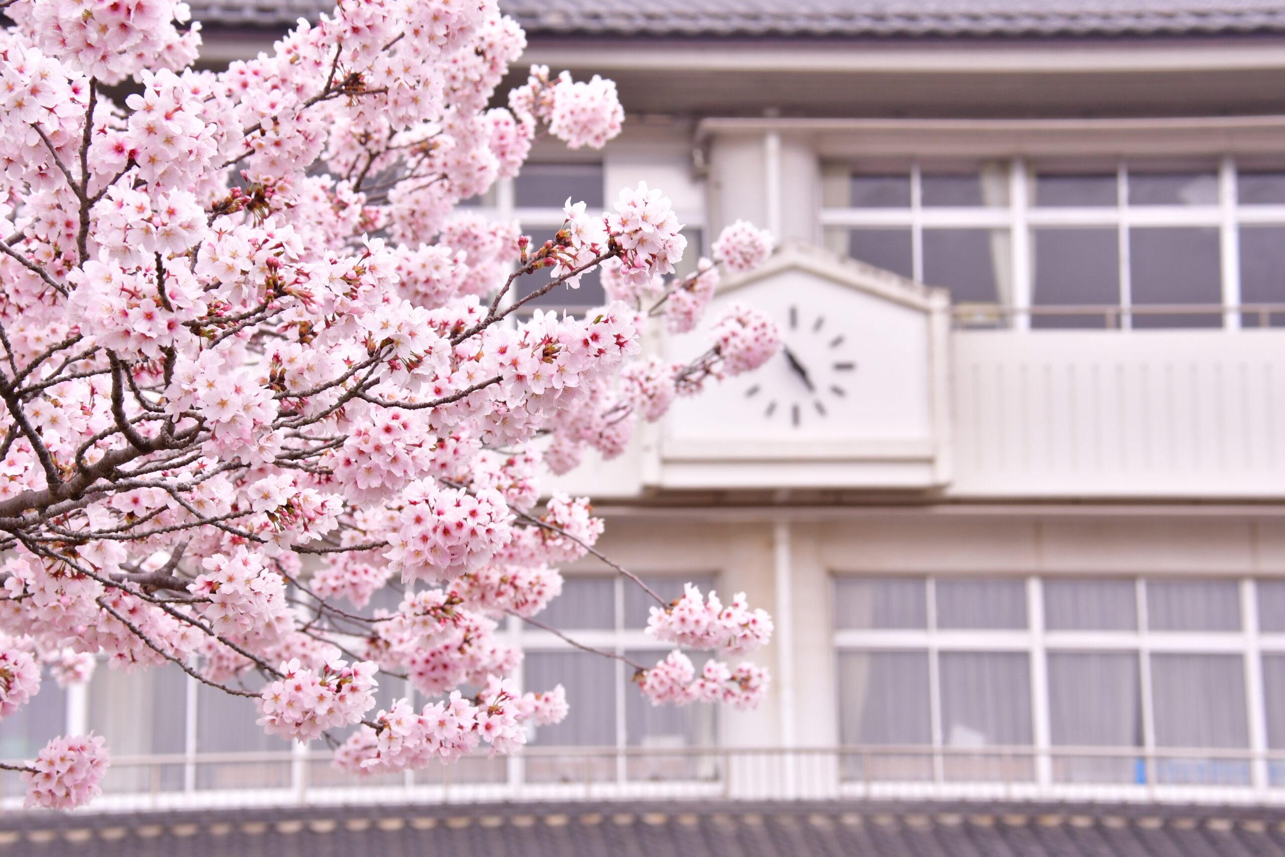 最後の桜が咲く前に