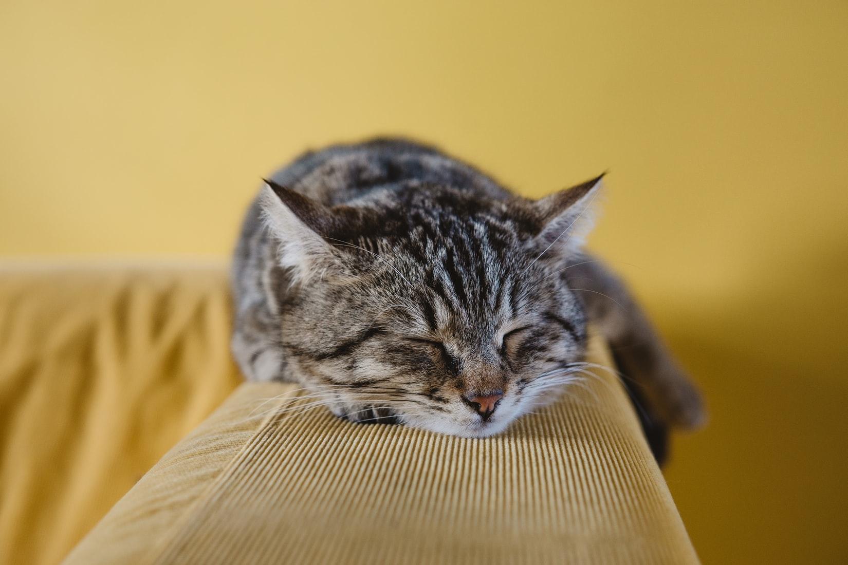 そもそもなんで授業中は眠くなるの?