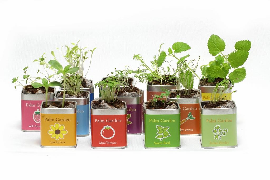 小さな栽培セット