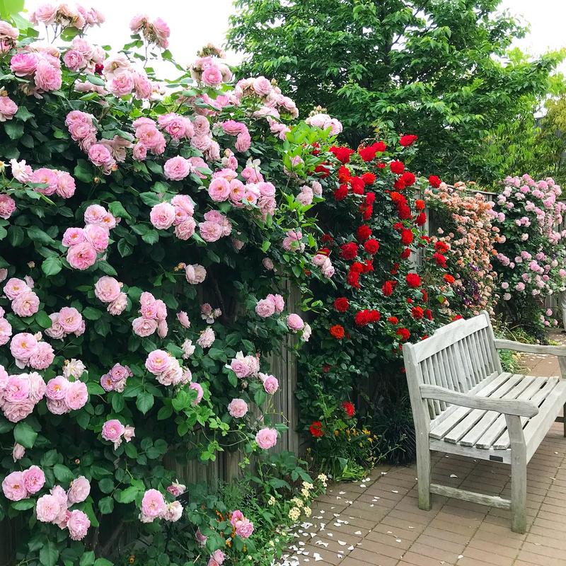 絵本の中に迷い込んだみたいな花園:横浜イングリッシュガーデン