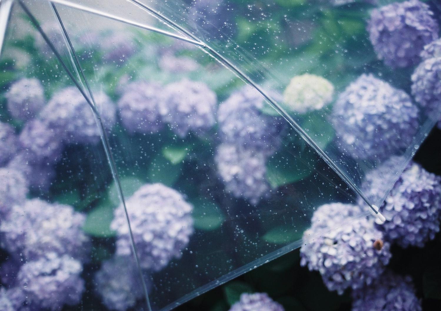 梅雨の儚さが好き