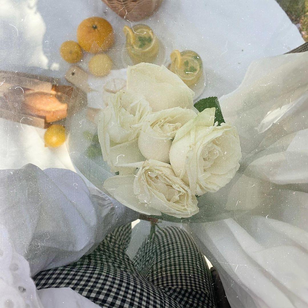 白い薔薇を纏ってみる?
