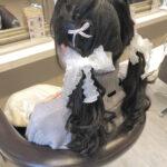 会場で一番可愛いオタク宣言。サロン&セルフで挑戦したいとっておきヘアスタイル