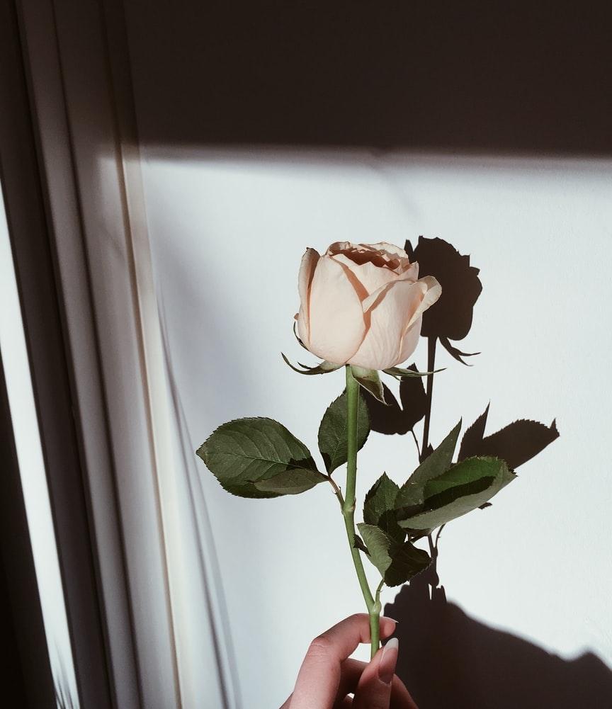 主な誕生花:バラ