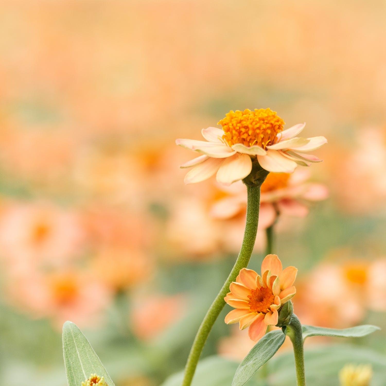 あのお花の花言葉ってなんだっけ?