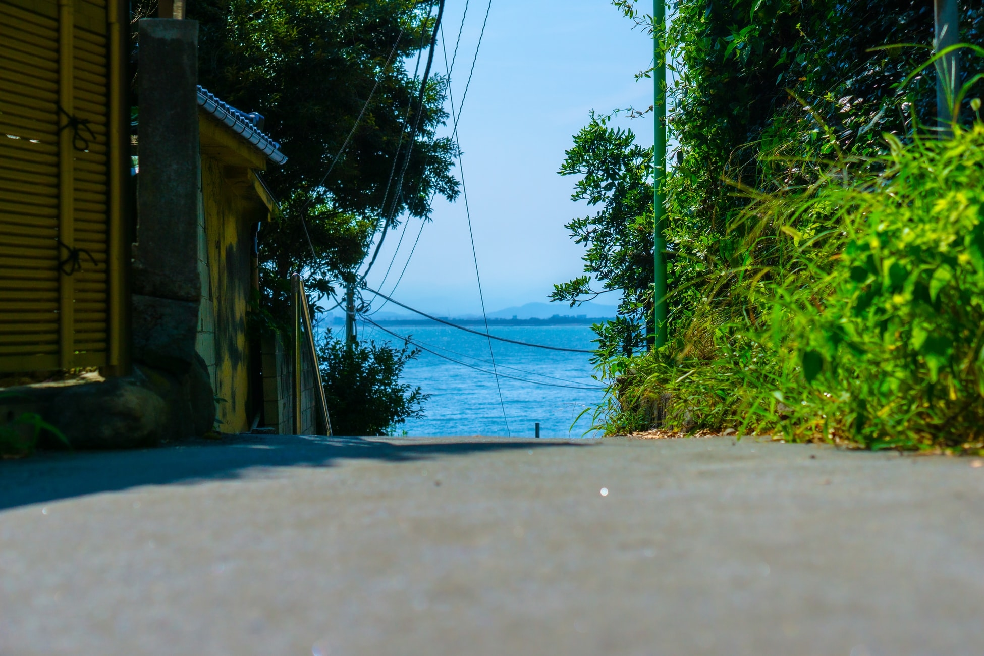江の島名物「しらす」に注目です!