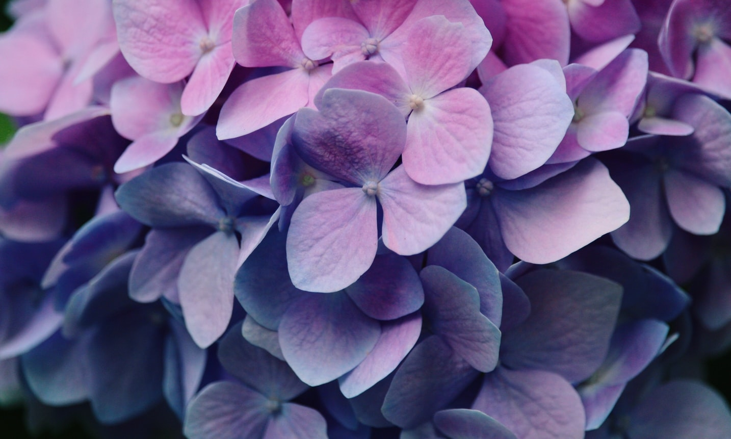 気品のある紫色