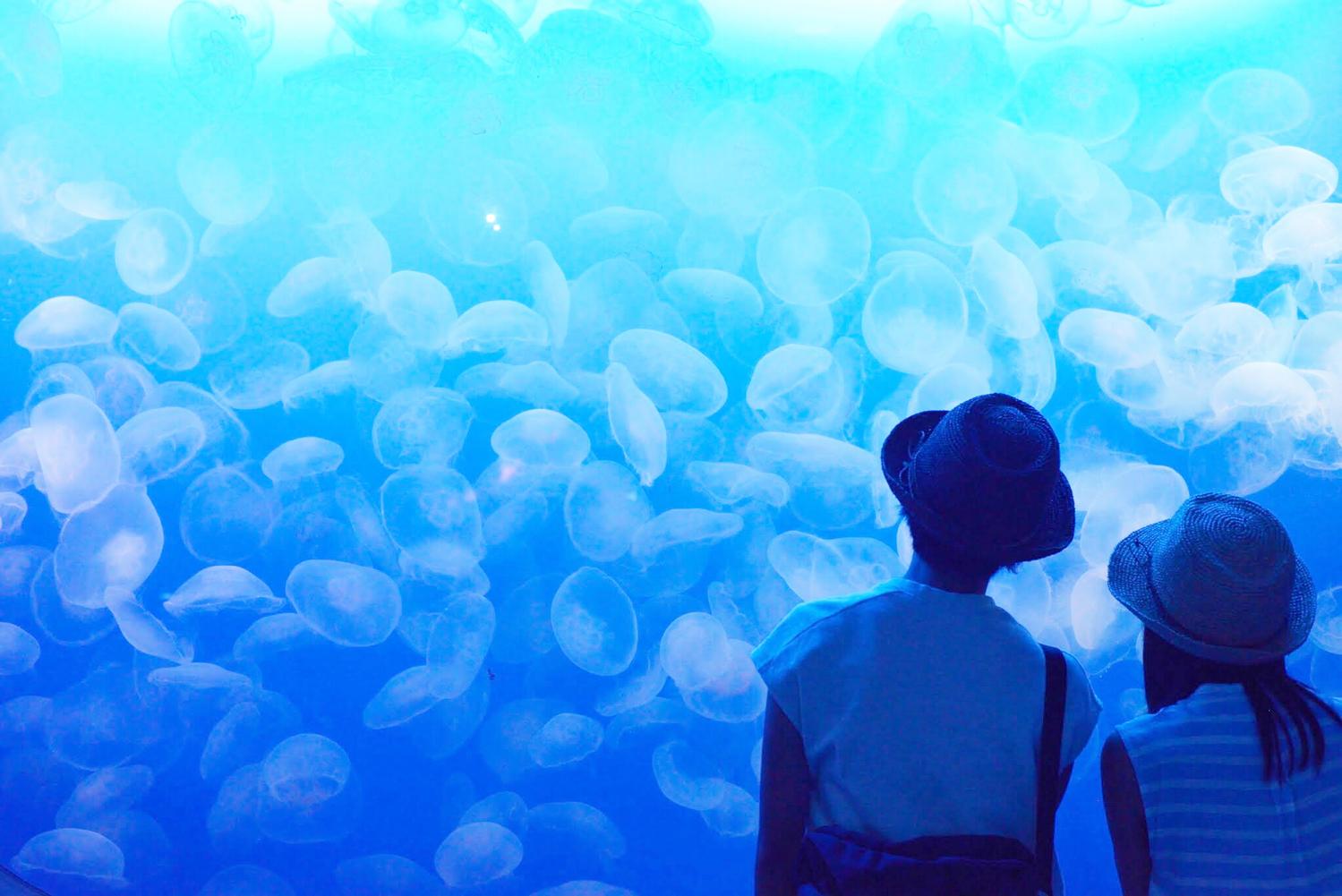 水族館でロマンティックな雰囲気に浸って