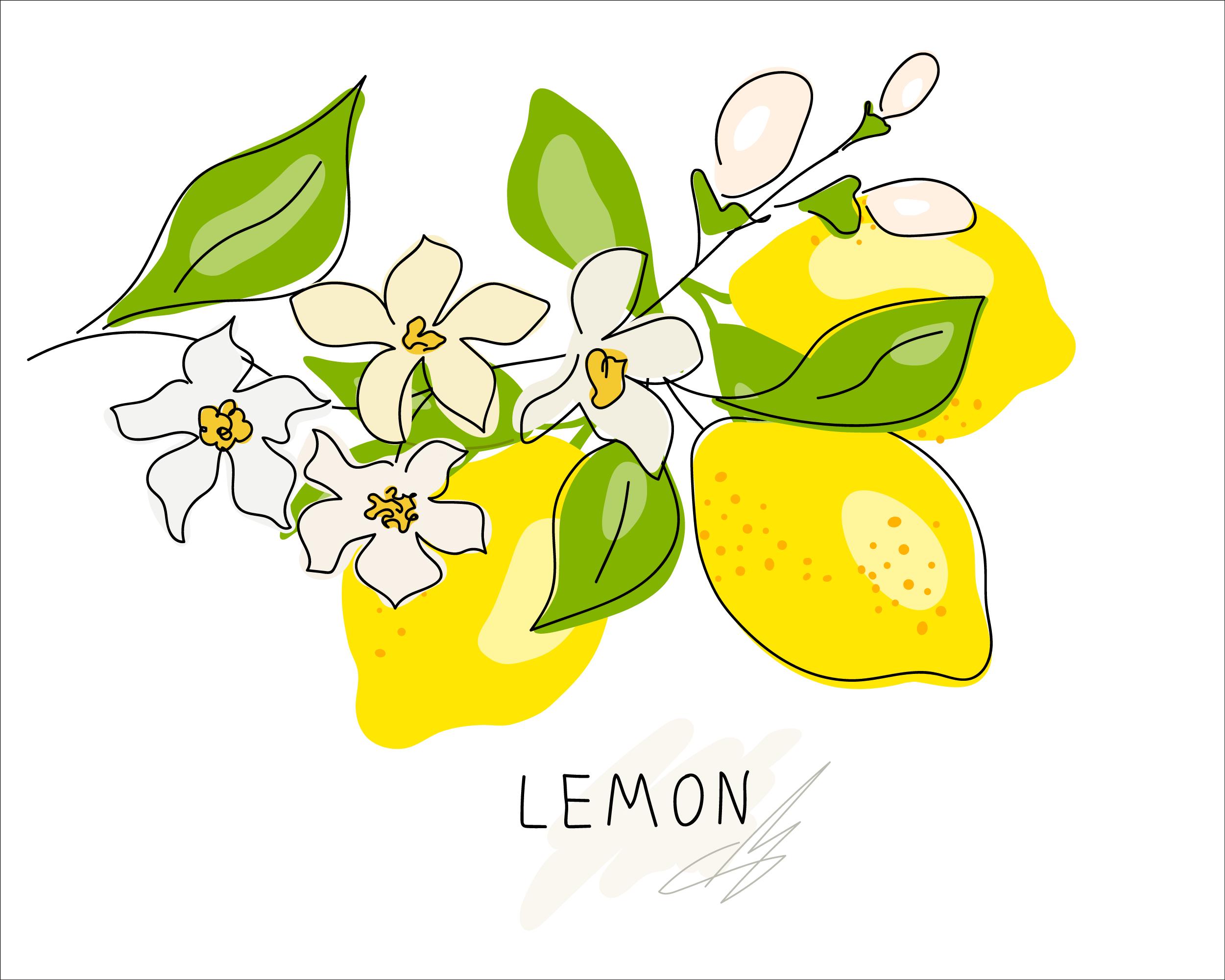 檸檬はお好き?