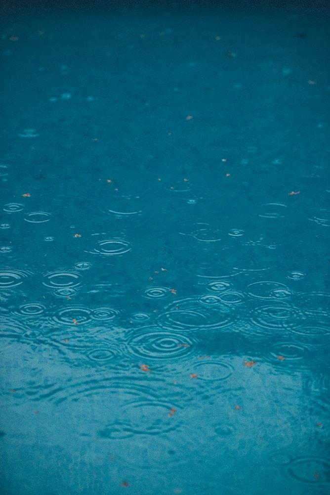 雨の日、湿度も高く、なんだかどんより