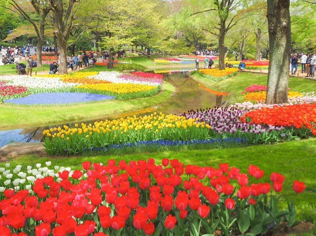 国営昭和記念公園(東京)