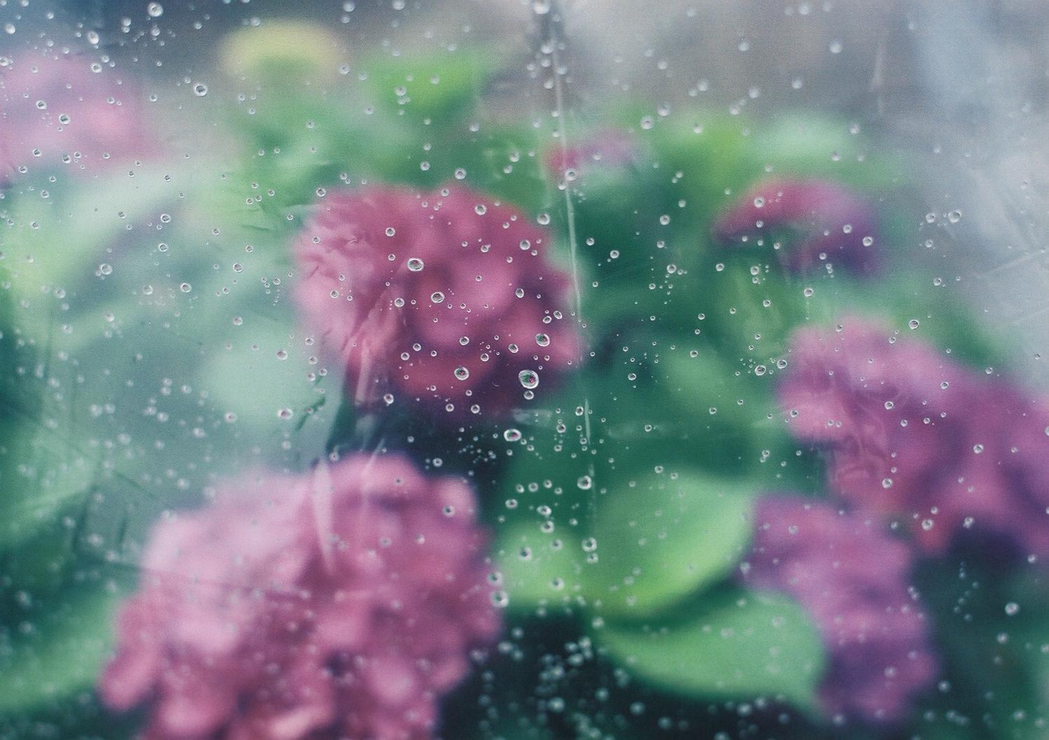 雨からの贈り物に、胸を高鳴らせて