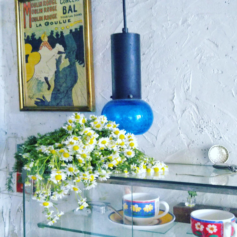 カモミール|小さなお花が可愛い