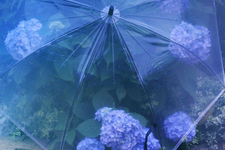 雨の日のトリコになってしまったわ♡