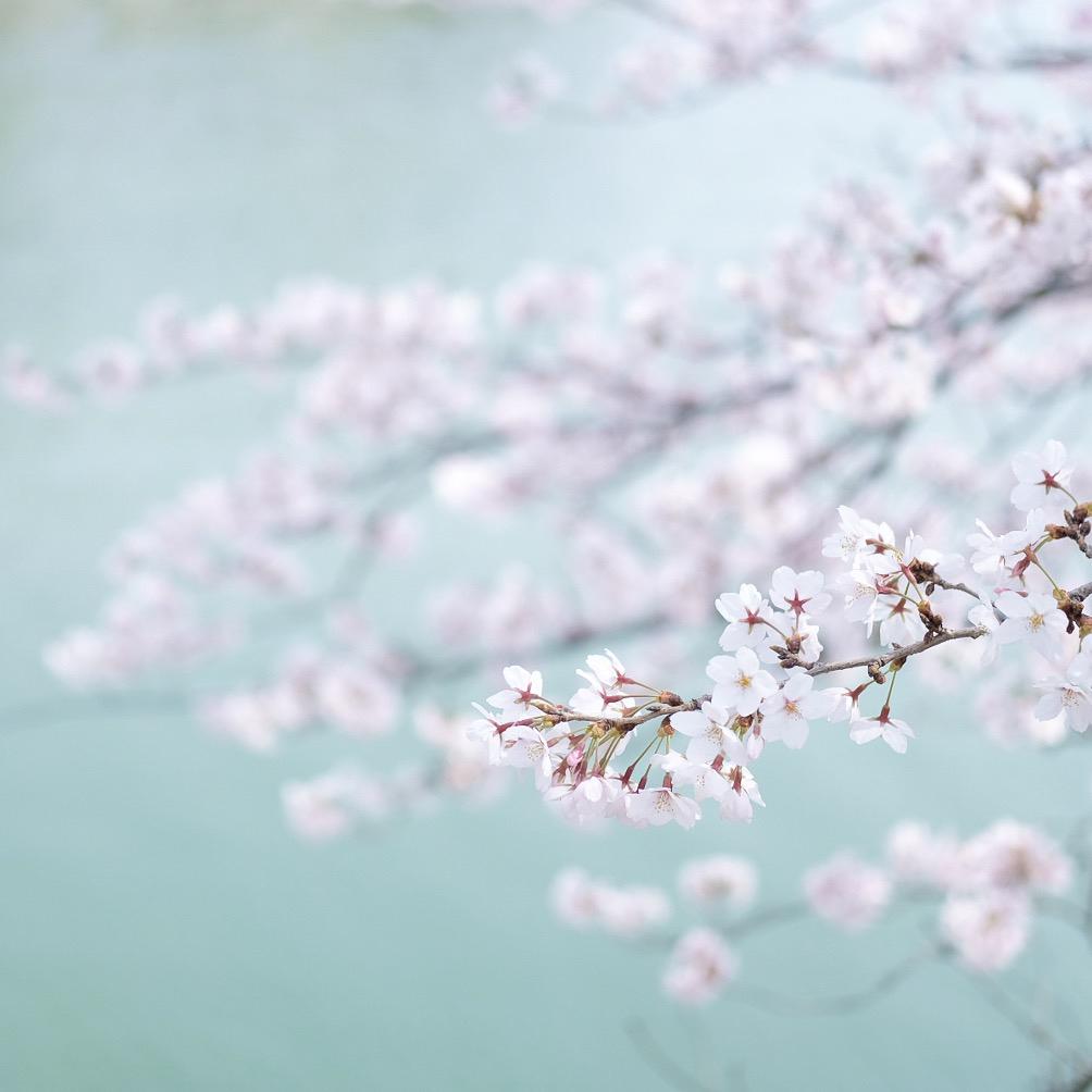 『ドラゴン桜』