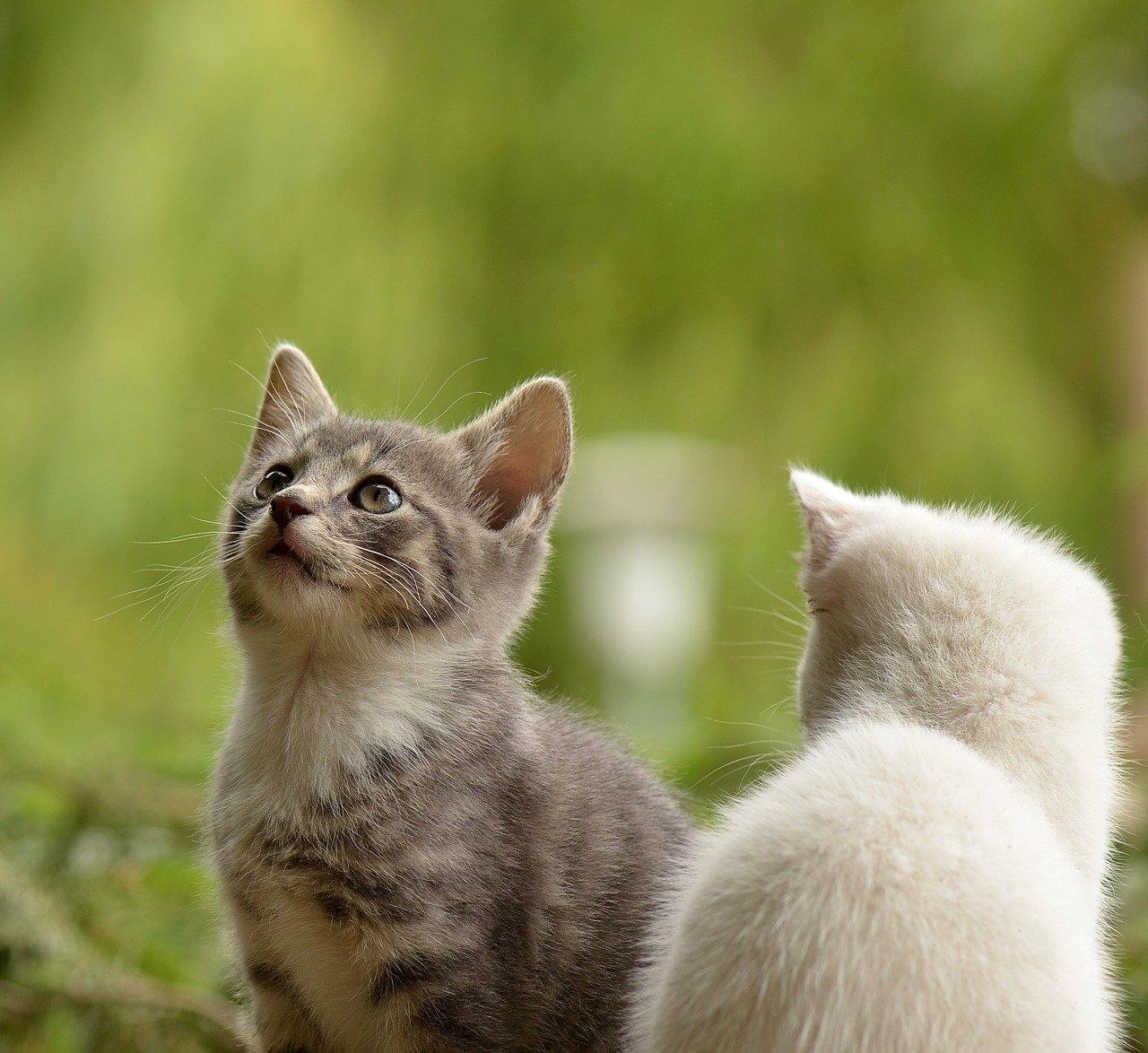 [7]可愛い動物の動画を見せるのも