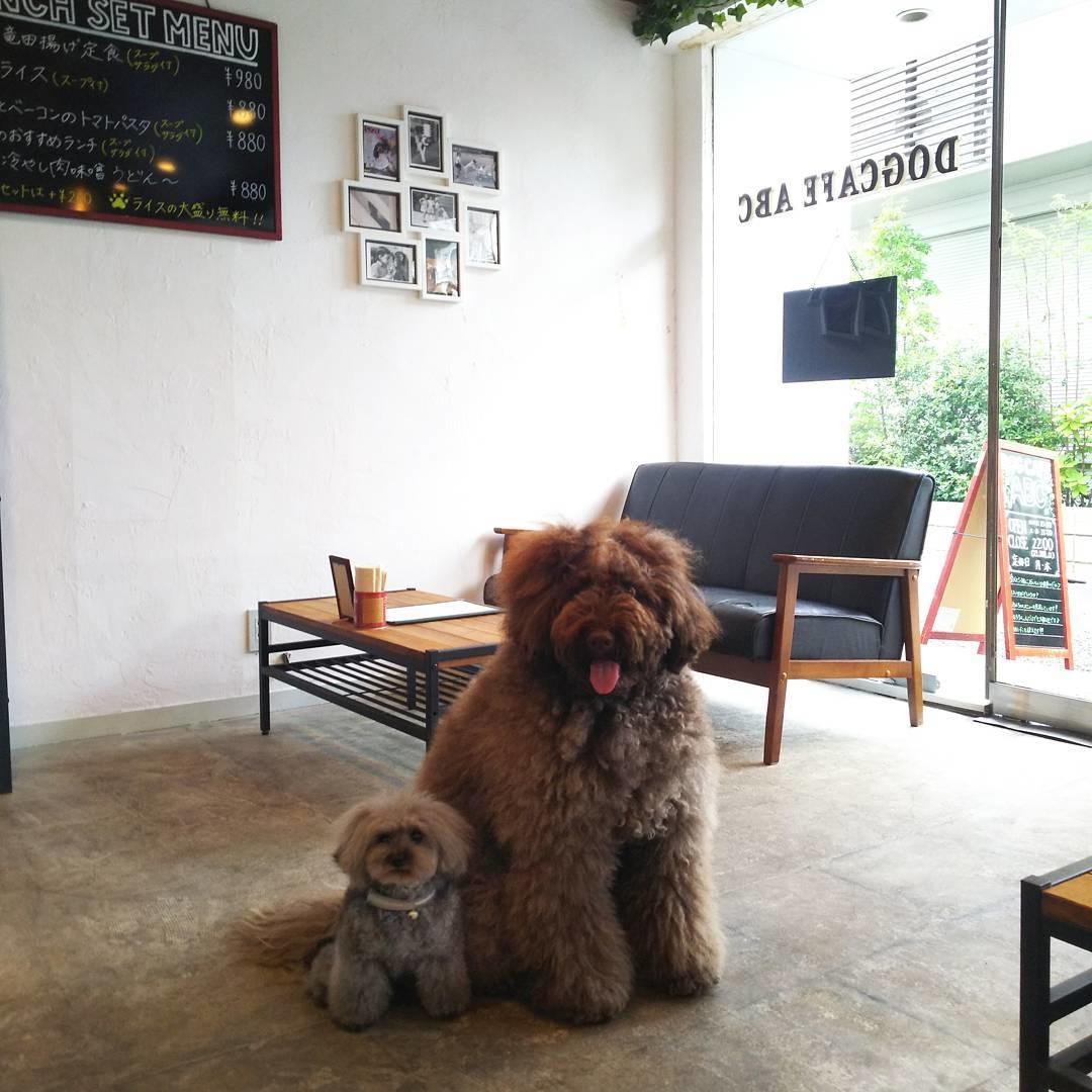 3:Dog Cafe ABC