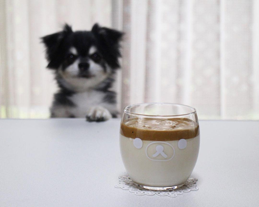 最新のコーヒーを楽しんで